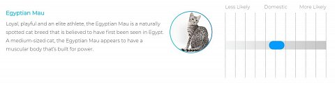 My cat's first DNA match: the Egyptian Mau.
