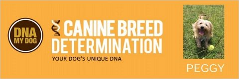 The top of Peggy's Canine Breed Determination report, customised with her name and photo.