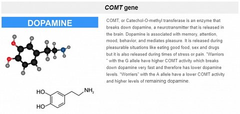 Information about the COMT transferase enzyme.