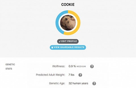 Cookie's results dashboard.