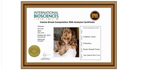 DNA My Dog Breed DNA Test