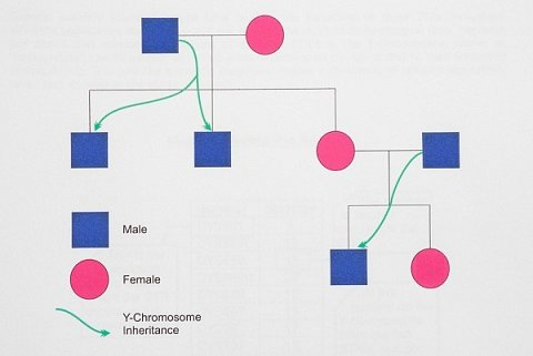 A chart explaining how the Y chromosome is inherited.