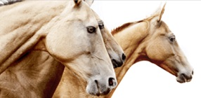 Equine DNA Profiling