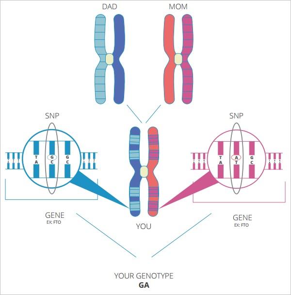 Vitagene    Reviews     DNA Testing Choice