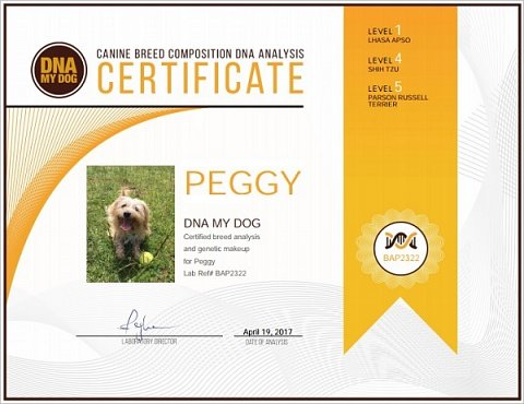 Peggy's Canine Breed Composition Analysis Certificate.