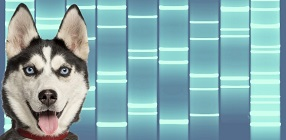 Pet Portrait DNA Art