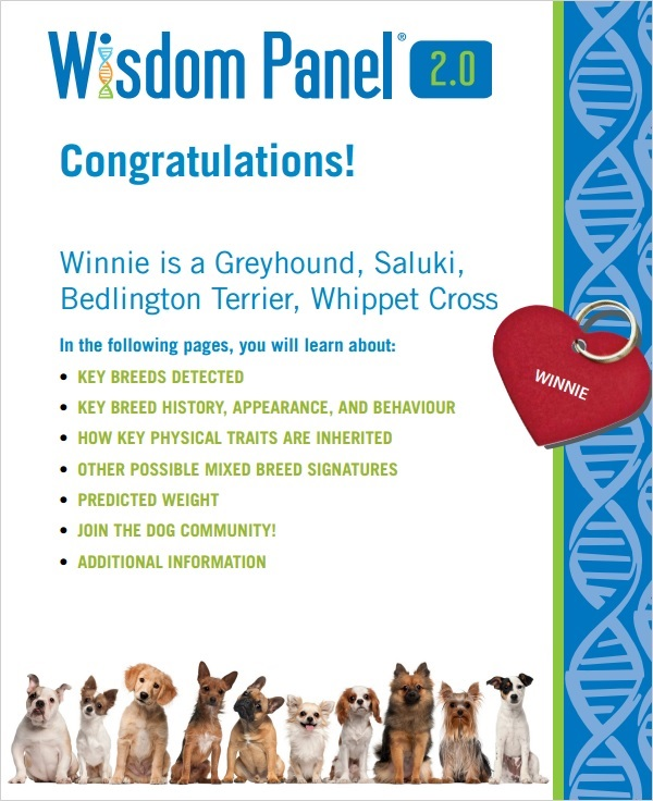 The front page of the report, which provided Winnie's breed mix.